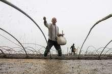 نخستین خزانه برنج سال جدید در آستارا ایجاد شد