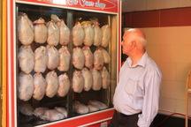 قیمت مرغ همدان در پیچ و خم تعیین تکلیف