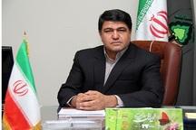 200 هزار هکتار بیابانزدایی در کرمان انجام شده است