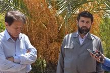 میزان آب کشت و صنعت های نیشکر خوزستان 30 درصد کاهش یافته است