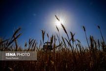 قانون بهرهوری کشاورزی و نظام جامع دامپروری نقطه عطف توسعه کشاورزی است