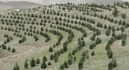 جنگل کاری 600 هکتار از اراضی استان مرکزی در هفته منابع طبیعی