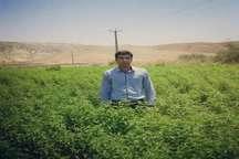 درآمد سه میلیارد ریالی کارآفرین باشتی از کشت گیاهان دارویی