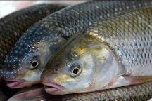 پنج هزار و ۵۰۰ تن ماهی خوراکی در خراسان رضوی تولید شد