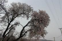 سرمازدگی باغات چهارمحال و بختیاری  دما به 4 درجه زیر صفر رسید