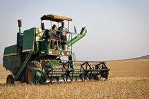 برداشت گندم در مازندران آغاز شد
