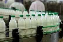 فعالیت 71 واحد صنعتی پرورش گاو شیری در کردستان  مصرف سرانه شیر کردستان از میانگین جهانی بالاتر است