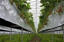 20میلیارد ریال برای احداث مجتمع گلخانه ای شهرستان باشت هزینه شد