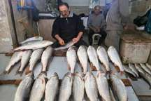 وفور صید در مازندران قیمت ماهی سفید را تعدیل کرد