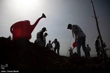 ۱۰۰ هکتار از اراضی استان ایلام توسط سپاه استان نهالکاری شد
