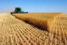 اختصاص 30 میلیارد ریال تسهیلات به فعالان بخش کشاورزی