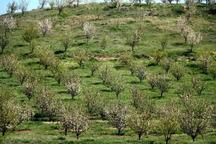 طرح باغداری در 140 هکتار از اراضی شیب دار استان مرکزی اجرا شد