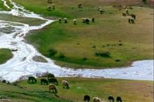 800 هزار هکتار اراضی جیرفت زیر پوشش حفاظت مشارکتی است