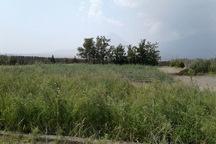 مشارکت 20 میلیارد ریالی بهره برداران در مراتع آذربایجان غربی