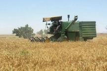 خرید تضمینی گندم و کلزا در خوزستان شروع شد