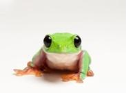 کم یاب ترین حیوانات روی زمین که شاید دیگر آنها را نبینید + تصاویر