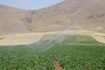 73 هزار هکتار از اراضی کرمانشاه مجهز به آبیاری تحت فشار است