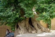 مراتب ثبت ۳ اثر میراث طبیعی به استاندار کردستان ابلاغ شد