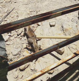 روباه گرفتار شده به طبیعت کازرون بازگردانده شد