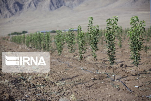 پیشرفت ۸۰ درصدی اقدامات بیولوژیکی در مراتع استان تهران