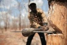 قانونی مبنی بر ممنوع بودن زراعت، قطع و حمل چوب وجود ندارد