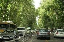 1100 اصله چنار در خیابان ولی عصر پایتخت غرس می شود