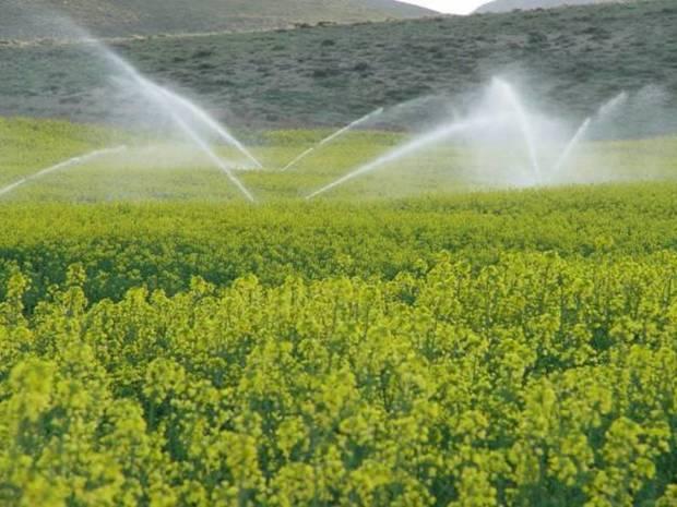هزار طرح کشاورزی سیستان و بلوچستان آماده افتتاح است