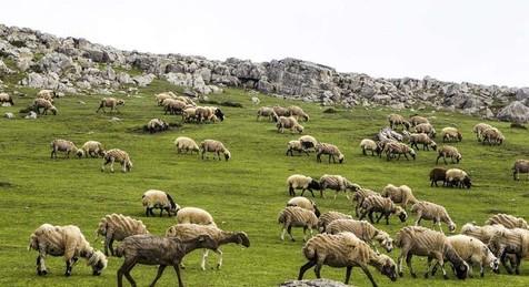 ییلاق سوباتان، بهشت زیبای ایران+ تصاویر