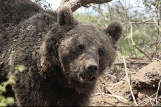 خشکسالی حیات وحش منطقه حفاظت شده پرور را فراری می دهد