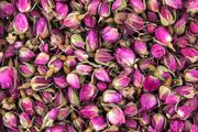 برداشت گل محمدی از 10 آموزشگاه بخش رخ تربت حیدریه