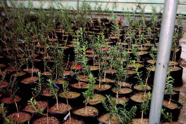 19 نهالستان در قزوین مجوز تولید دارند