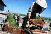 عسل در کام زنبورداران اسدآبادی تلخ شد