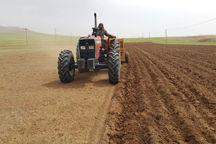 ۴۰۰ هزار هکتار از اراضی همدان زیر کشت گندم رفت