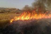2 هکتار از مزارع لردگان در آتش سوخت