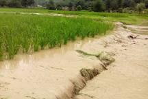 سیل 298 میلیارد ریال به کشاورزی قزوین خسارت زد