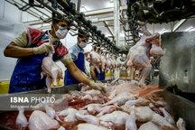 از سرگیری فعالیت کشتارگاه مرغ در چهارمحال و بختیاری