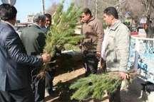 یک مسئول در شهرداری: 70 هزار اصله نهال بین شهروندان قمی توزیع می شود