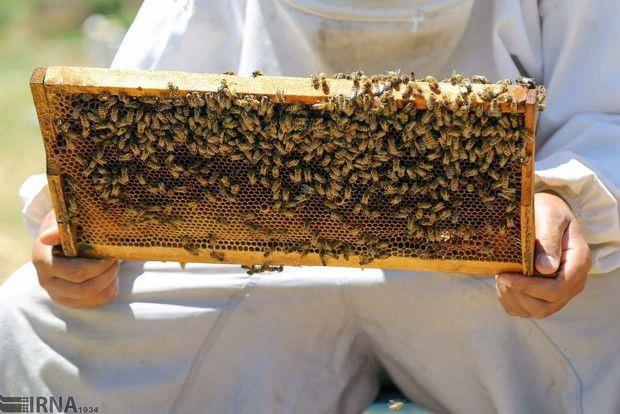 ۱۴۱ میلیارد ریال عسل در سروآباد تولید شد