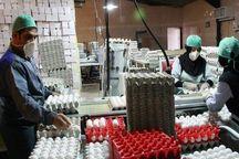 صدور روزانه 200 تن تخم مرغ از خراسان رضوی به سایر استانها