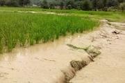 کشاورزی کهگیلویه و بویراحمد پس از بارندگی ها