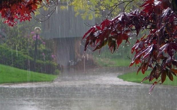 16 شهرستان خراسان رضوی باران داشتند