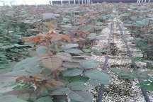 مبارزه بیولوژیک با آفات نباتی درسطح سه هزارهکتاردرکهگیلویه وبویراحمد