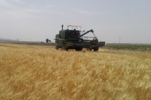 42 هزار از اراضی کشاورزی قزوین تحت پوشش بیمه قرار گرفت