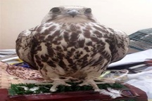 کشف و ضبط پرندگان کمیاب در شهرستان نهبندان