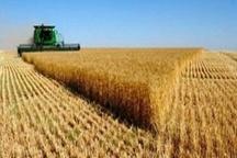 آغاز خرید گندم در مناطق جنوبی لرستان