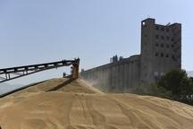 خرید گندم از مرز 27 هزار تن در ایرانشهر گذشت