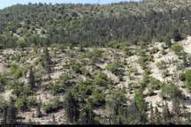 شهرستان دماوند 10 هزار هکتار ذخیرگاه جنگلی دارد