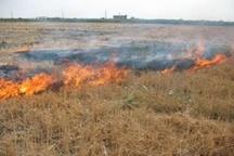 جرم بودن سوزاندن ضایعات کشاورزی
