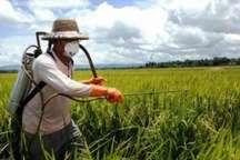 آفت زدایی از 20 هزار هکتار زمین کشاورزی در آذربایجان غربی