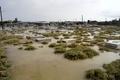 حق آلایندگی و ارزش افزوده هندیجان ناچیز است